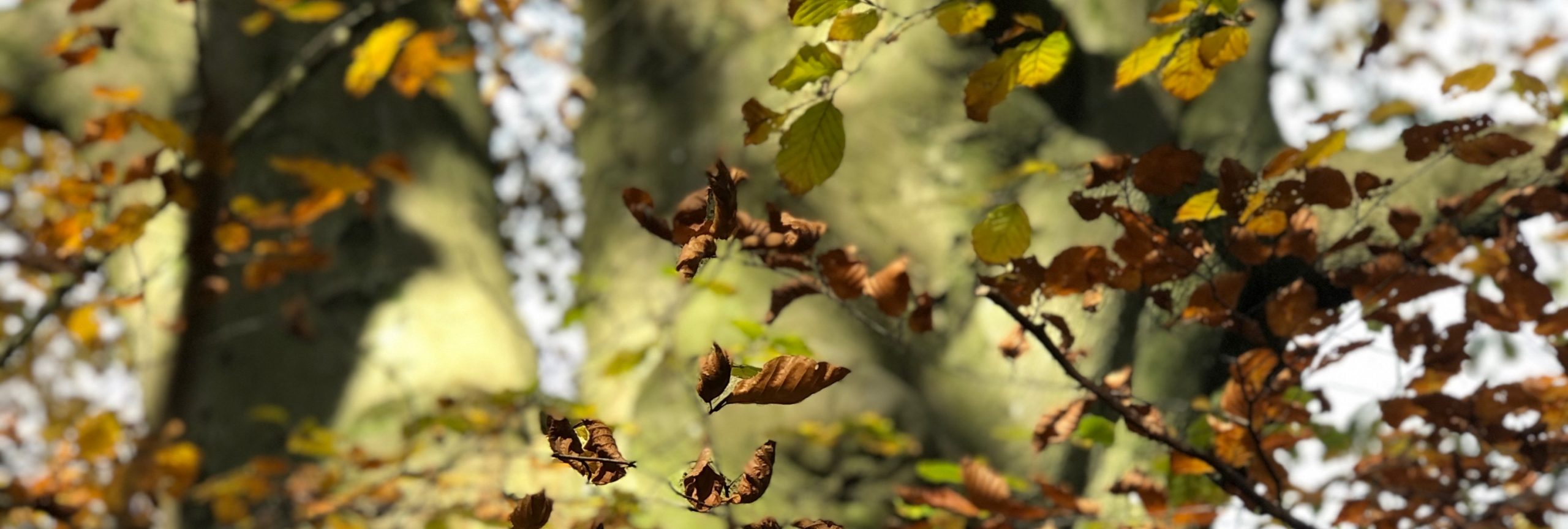 Trees and leaves Counselling in Kendal with Kate Sumsion
